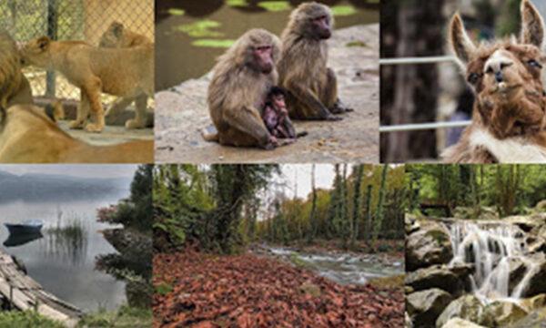 Fahrt nach Sapanca & Masukiye und zum Zoo